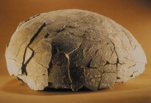 Cet oeuf de titanosaure est pourri depuis quelques millions d'années