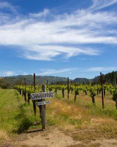 Vignes de chardonnay