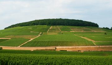 La colline de Corton