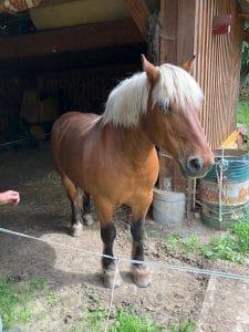 zusslin_cheval