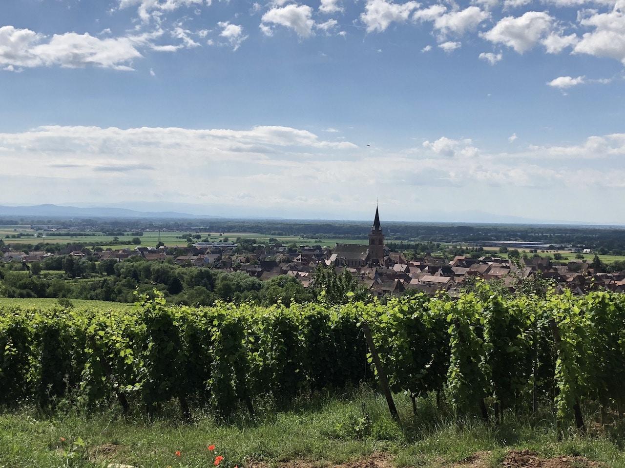 vignoble_deiss_bergheim